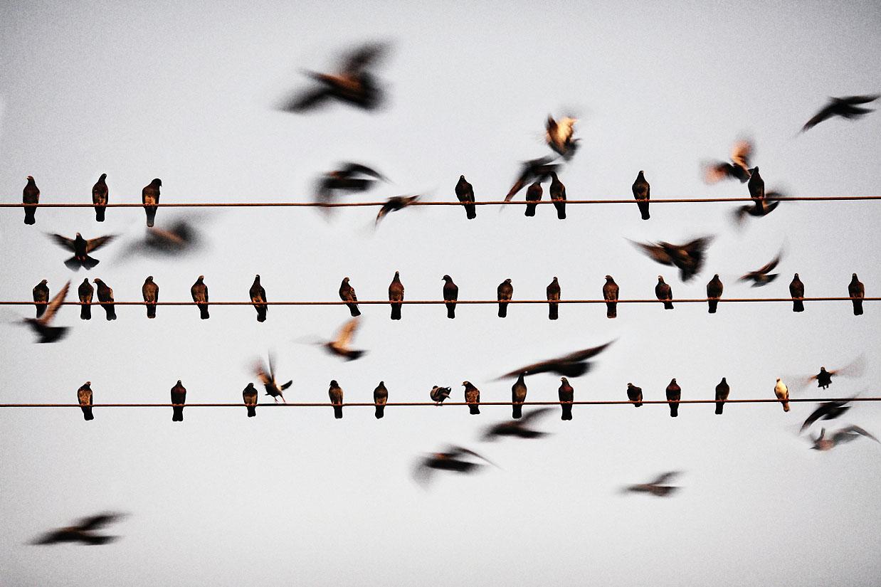birds_on_wires