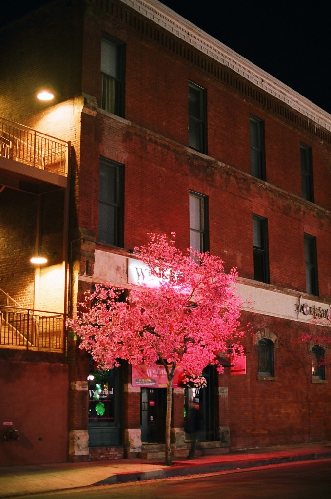 Tree lit by night, old brick building at night