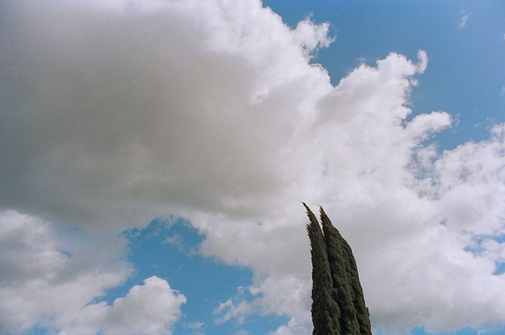Italian Cypress blowing in the wind against a partly cloudy sky