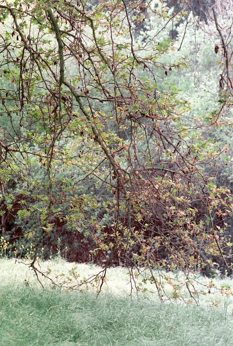 walnut_creek-2