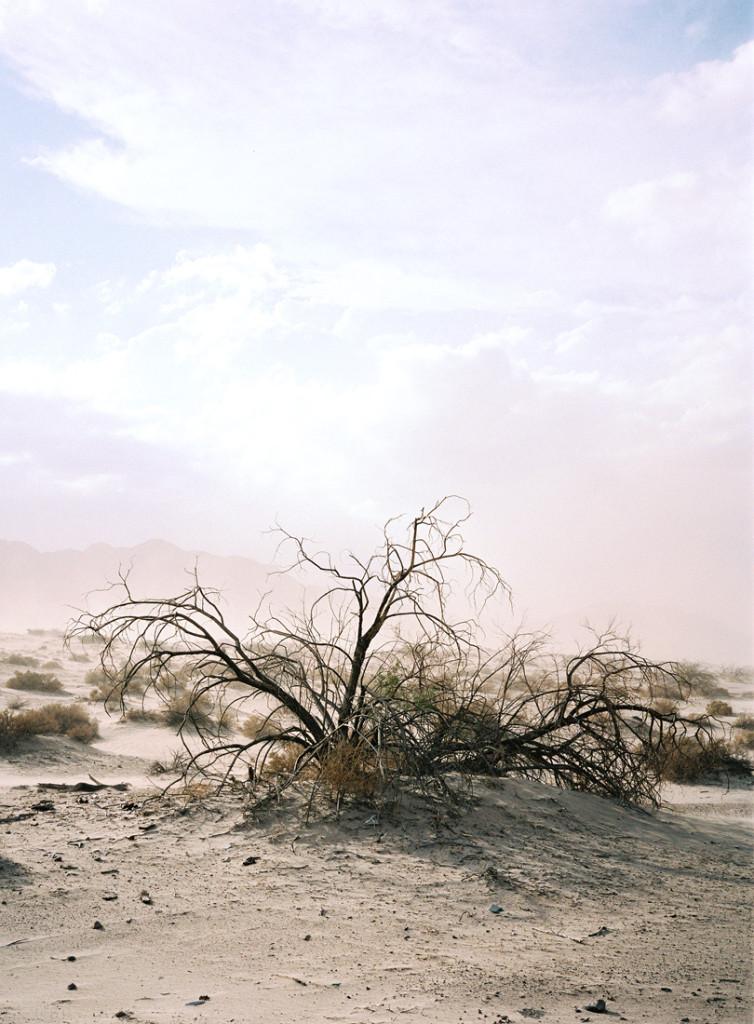 sand_storm-2
