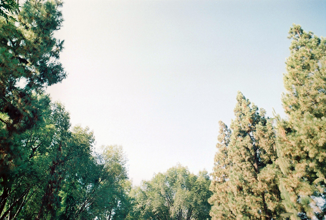Photo of treetops, Fujifilm Pro 400h film, green trees with clear sky