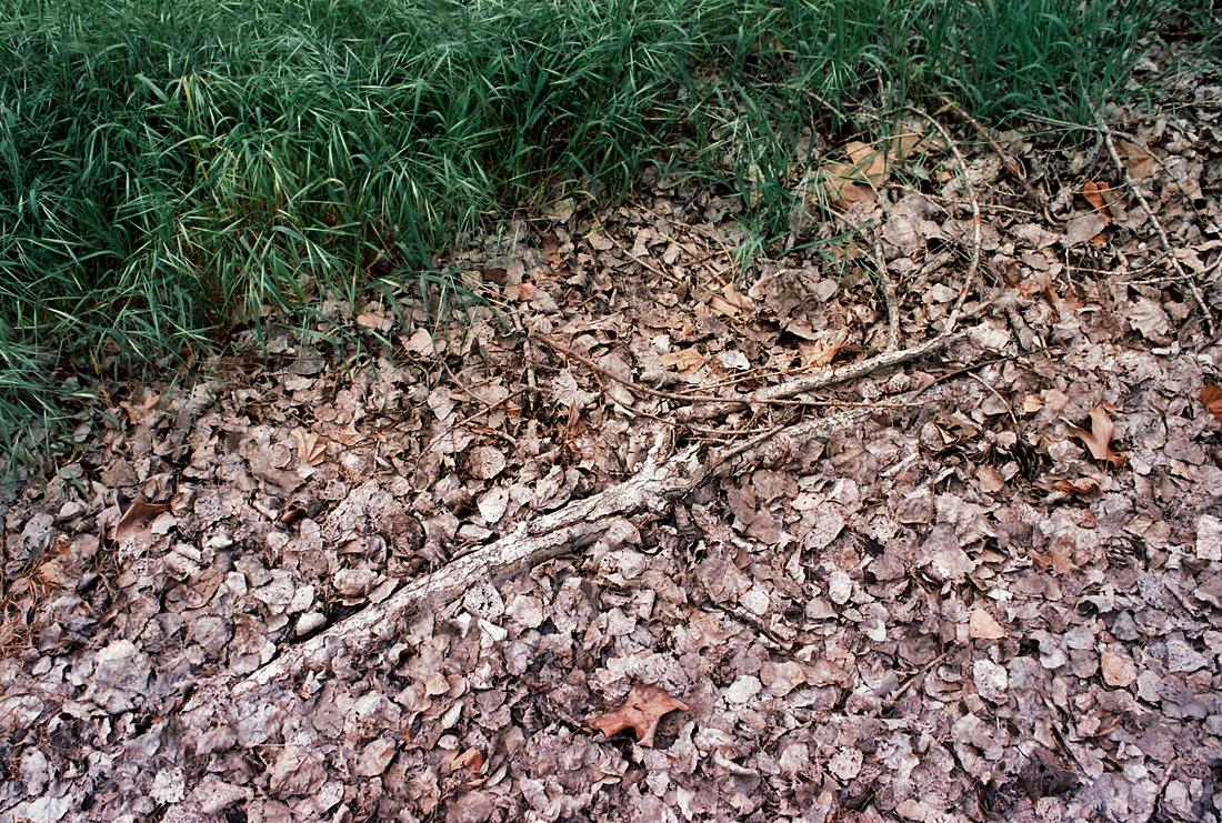 walnut_creek-5