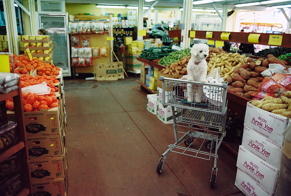 local_grocer